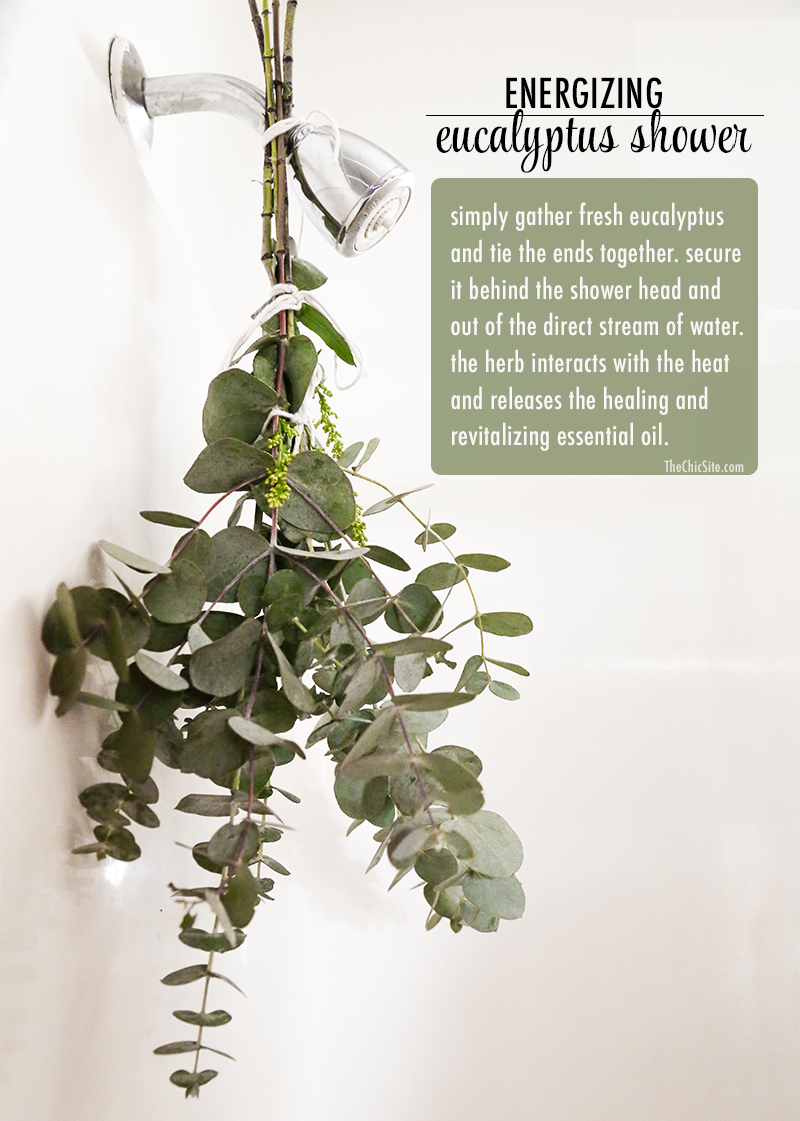 TheChic_energizing eucalyptus shower 1