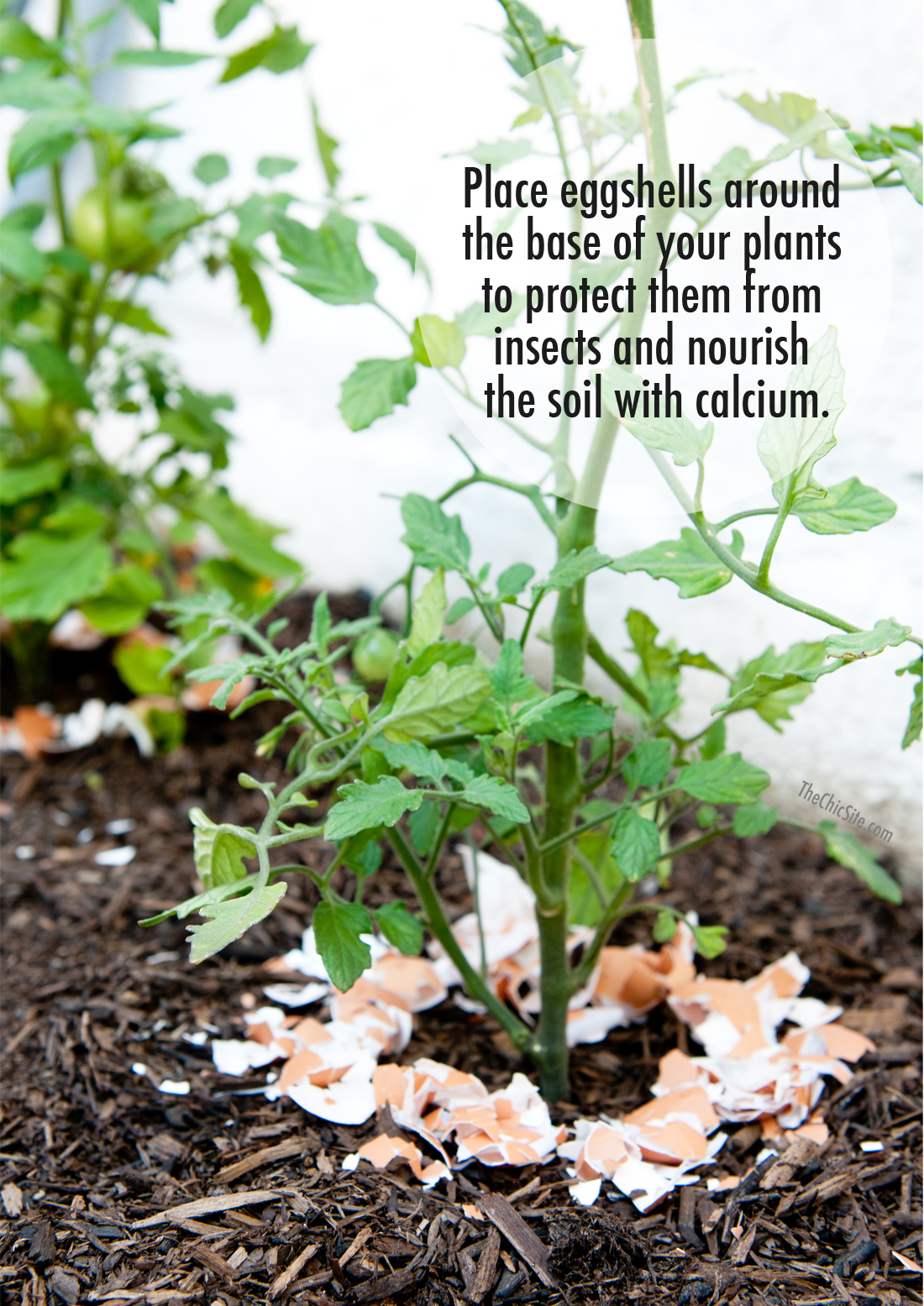 Eggshells in Your Garden